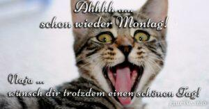 Ahhhh .... schon wieder Montag! Naja ... wünsche dir trotzdem einen schönen Tag!